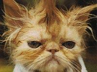 Когда после кастрации можно мыть кота